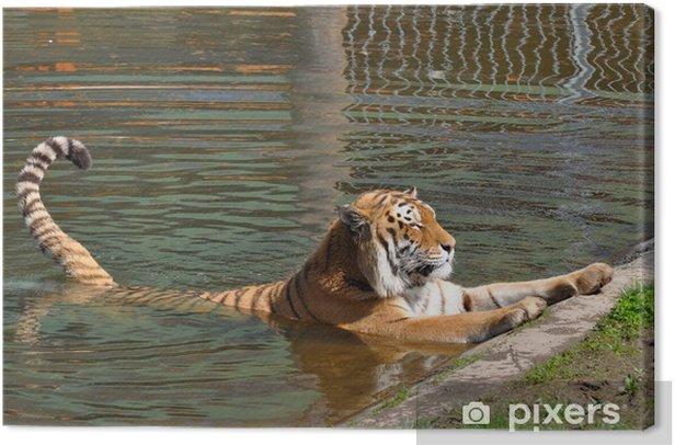 Obraz na płótnie Tygrys syberyjski kąpieli - Ssaki