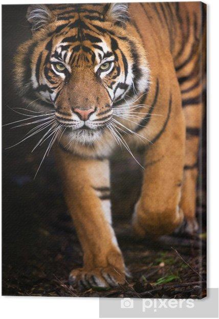 Obraz na płótnie Tygrys wychodzi z cienia - Tematy