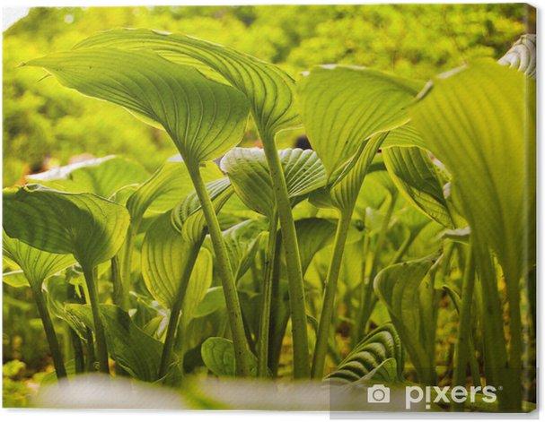 Obraz na płótnie Uman Sofiyivka - Rośliny