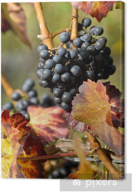 Obraz na płótnie Vine z winogron - Pory roku