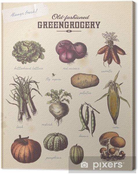 Obraz na płótnie Vintage warzywniaku na afisz z różnych warzyw (2) -