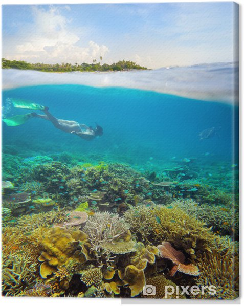 Obraz na płótnie W poszukiwaniu podwodnej przygodzie na rafie koralowej. - Sporty wodne