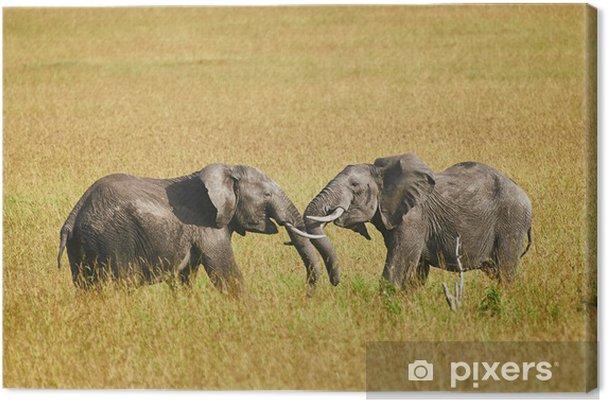 Obraz na płótnie Walka między dwóch mężczyzn słoni - Tematy