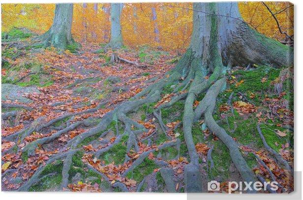 Obraz na płótnie Wanderweg szlak 10 - Drzewa