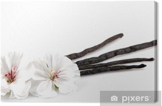 Obraz na płótnie Wanilia i kwiat - Rośliny