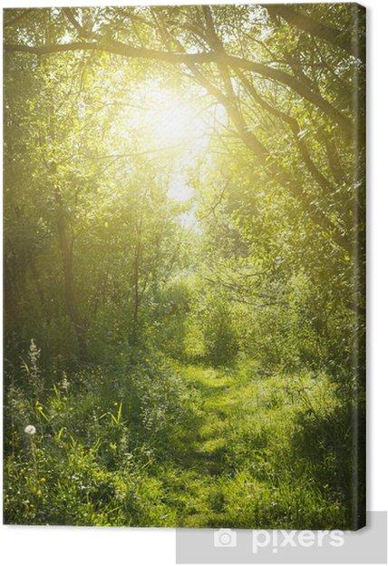 Obraz na płótnie Wąska ścieżka w lesie bajki - Lasy