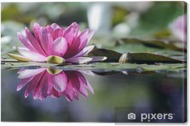 Obraz na płótnie Waterlily Reflection - Kwiaty
