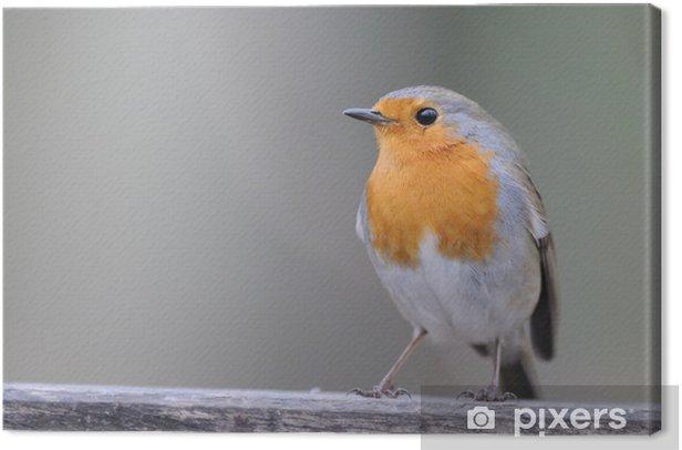 Obraz na płótnie Wąwóz rouge - Ptaki
