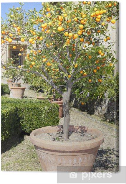 Obraz na płótnie Wazon Mandarin, Villa Caruso - Posiłki
