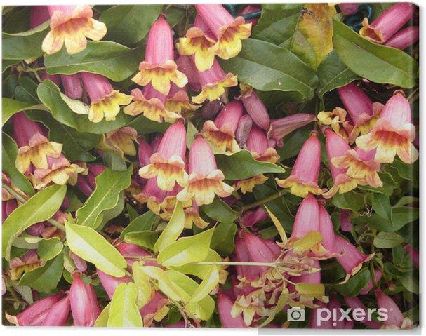 Obraz na płótnie Wiciokrzew - Kwiaty