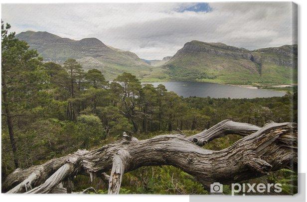 Obraz na płótnie Widok Loch Maree, Szkocja - Europa
