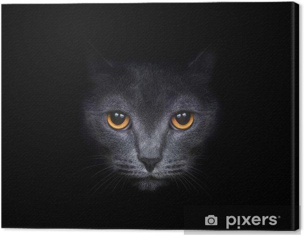 Obraz na płótnie Widok z ciemności. kaganiec kota na czarnym tle. - Tematy