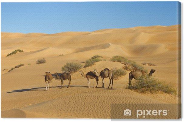 Obraz na płótnie Wielbłądy na pustyni - Awbari Sand Sea, Sahara, Libia - Afryka