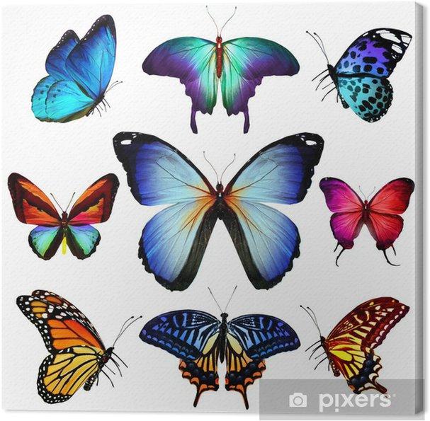 Obraz na płótnie Wiele różnych motyle latające, samodzielnie na białym tle - Inne Inne