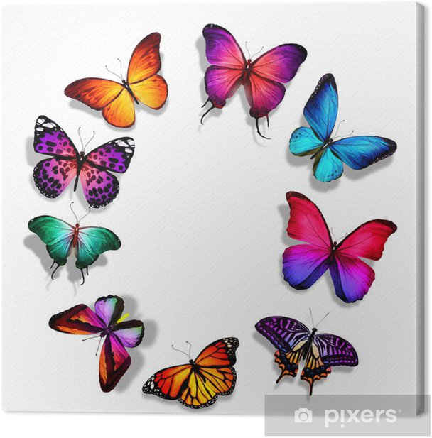 Obraz na płótnie Wiele różnych motyli, odizolowane na białym tle - Inne Inne