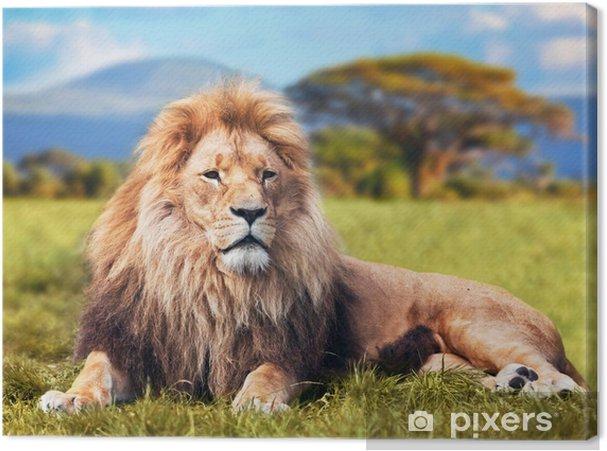 Obraz na płótnie Wielki lew leżący na sawannie trawie. Kenia, Afryka - Tematy