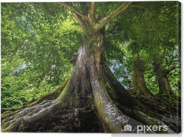 Obraz na płótnie Wielkie stare drzewo - Tematy
