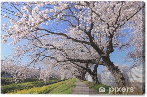 Obraz na płótnie Wiersz wiśni kwiat drzew - Wakacje