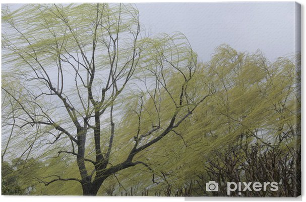 Obraz na płótnie Wierzby w deszczu i wietrze - Cuda natury