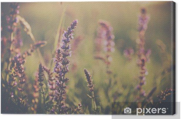 Obraz na płótnie Wild flower - Rośliny i kwiaty
