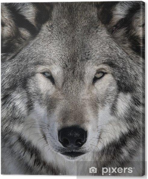 Obraz na płótnie Wilk -