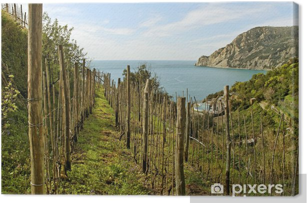 Obraz na płótnie Winnica nad morzem. - Rolnictwo