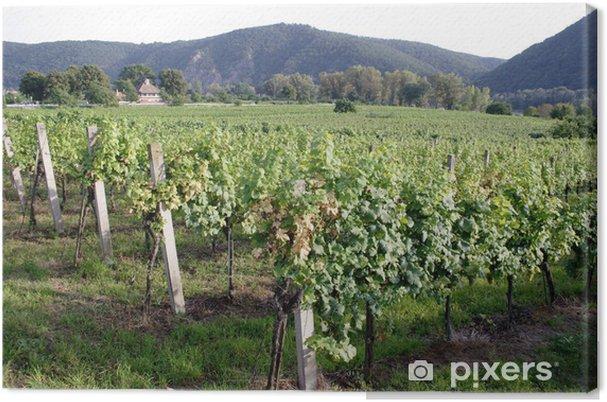 Obraz na płótnie Winnica - Krajobraz wiejski