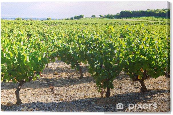 Obraz na płótnie Winnice plantacji w słoneczny letni dzień - Krajobraz wiejski