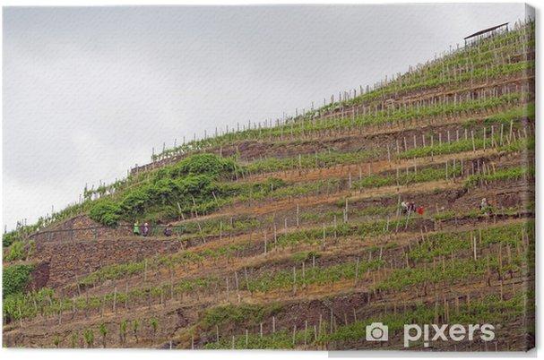 Obraz na płótnie Winnice: strome zbocza w Ahr (Nadrenia-Palatynat) - Europa
