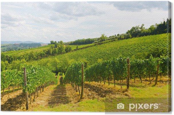 Obraz na płótnie Winnice - Pory roku