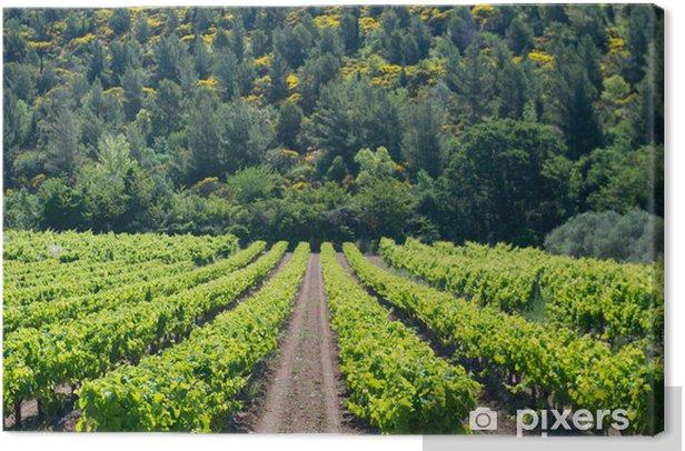 Obraz na płótnie Winnicy we Francji - Krajobraz wiejski