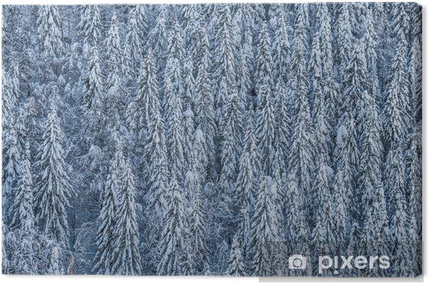 Obraz na płótnie Winterwald - Rośliny i kwiaty