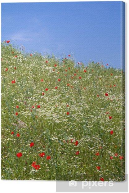 Obraz na płótnie Wiosenna łąka - rumianek i maki - Pory roku
