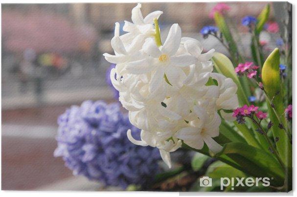 Obraz na płótnie Wiosenne kwiaty w Sztokholmie -