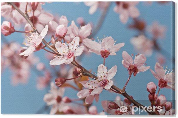 Obraz na płótnie Wiosenne kwiaty - Pory roku