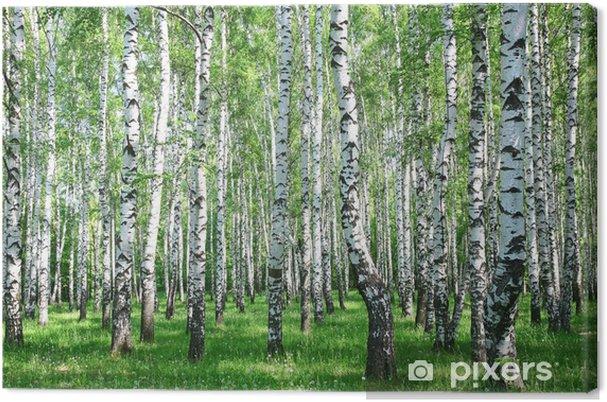 Obraz na płótnie Wiosna brzozowy las z śwież - Style