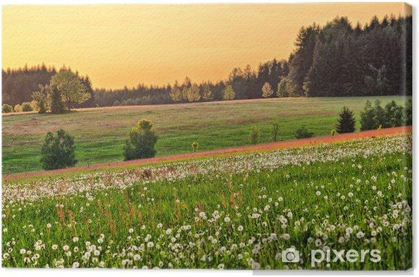 Obraz na płótnie Wiosna Kwitnące łąki - Krajobraz wiejski