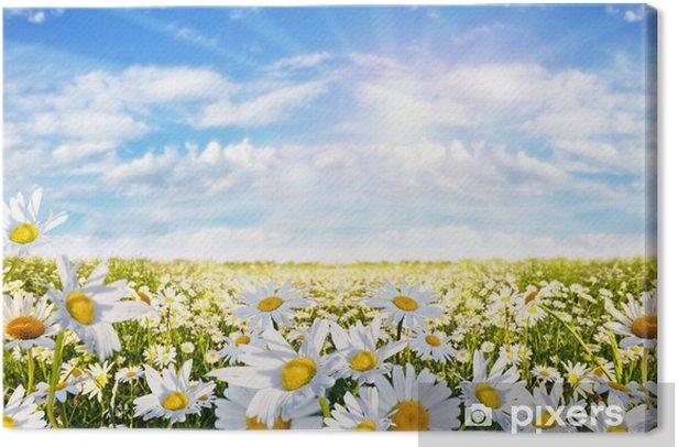 Obraz na płótnie Wiosna: pole daisy kwiatów z nieba i chmur - Tematy