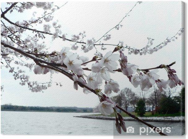 Obraz na płótnie Wiśnia kwiaty Waszyngtonie '08 - Tematy