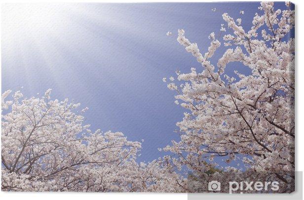 Obraz na płótnie Wiśniowe drzewo i słońce - Natura i dzicz