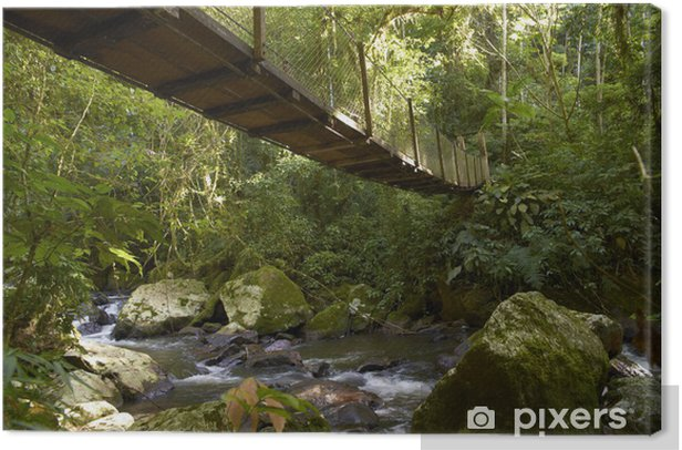 Obraz na płótnie Wiszący most w dżungli - Sporty na świeżym powietrzu