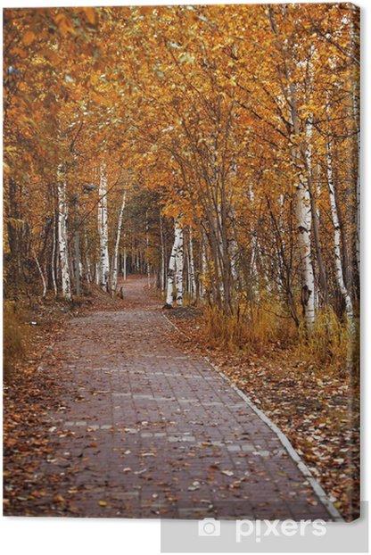 Obraz na płótnie Wybrukowana ścieżka w ogrodzie miasta w otoczeniu drzew jesienią - Tematy