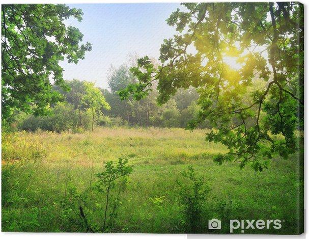 Obraz na płótnie Wyczyszczenie w lesie - Krajobraz wiejski