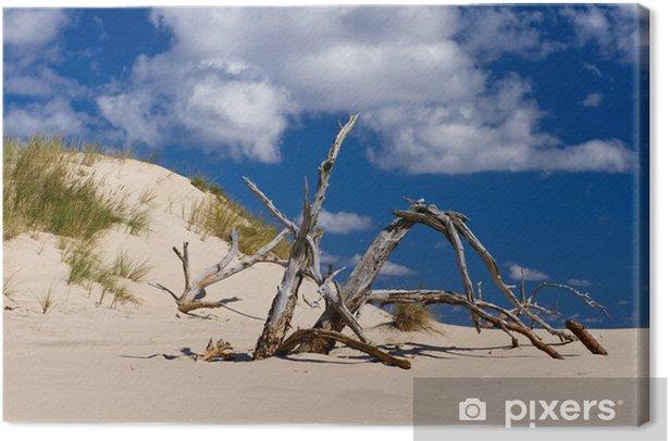 Obraz na płótnie Wydmy pustyni - Pustynia