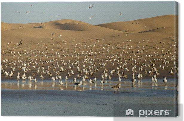 Obraz na płótnie Wydmy w Agadirze z mewy - Pustynie
