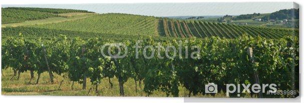 Obraz na płótnie Wzgórza i winnice - Rolnictwo