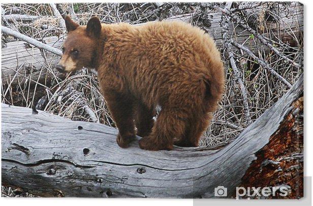 Obraz na płótnie Yellowstone bear - Tematy