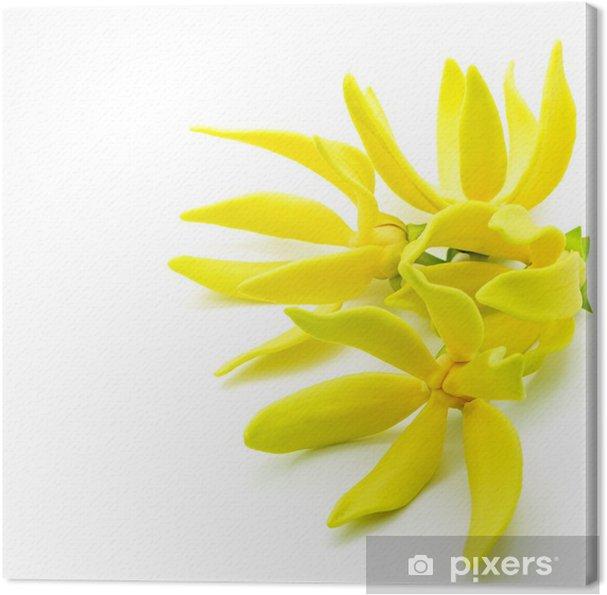 Obraz na płótnie Ylang-ylang - Kwiaty