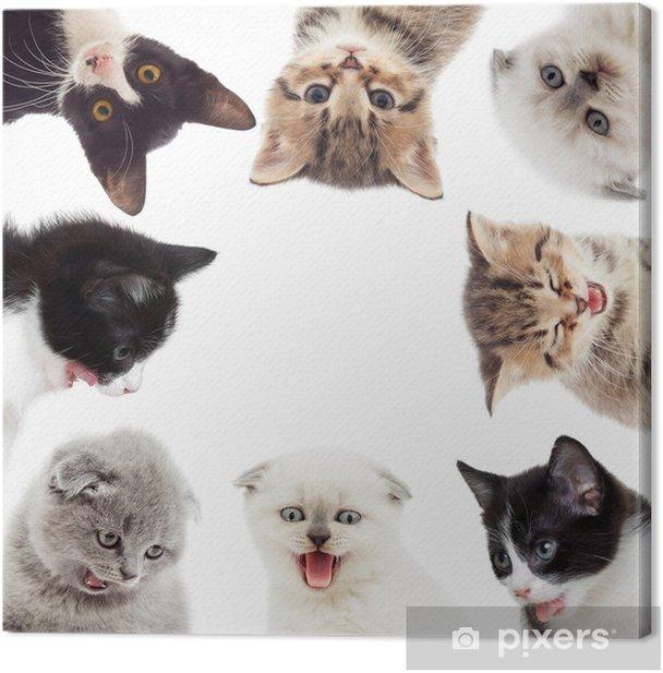 Obraz na płótnie Zabawne kociaki - Ssaki