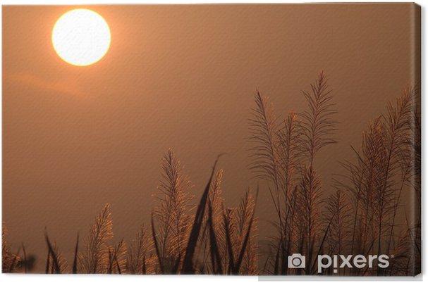 Obraz na płótnie Zachód słońca i trawy - Niebo